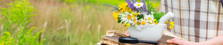 The 10 Best Online Herbalist Courses for Natural Health Lovers