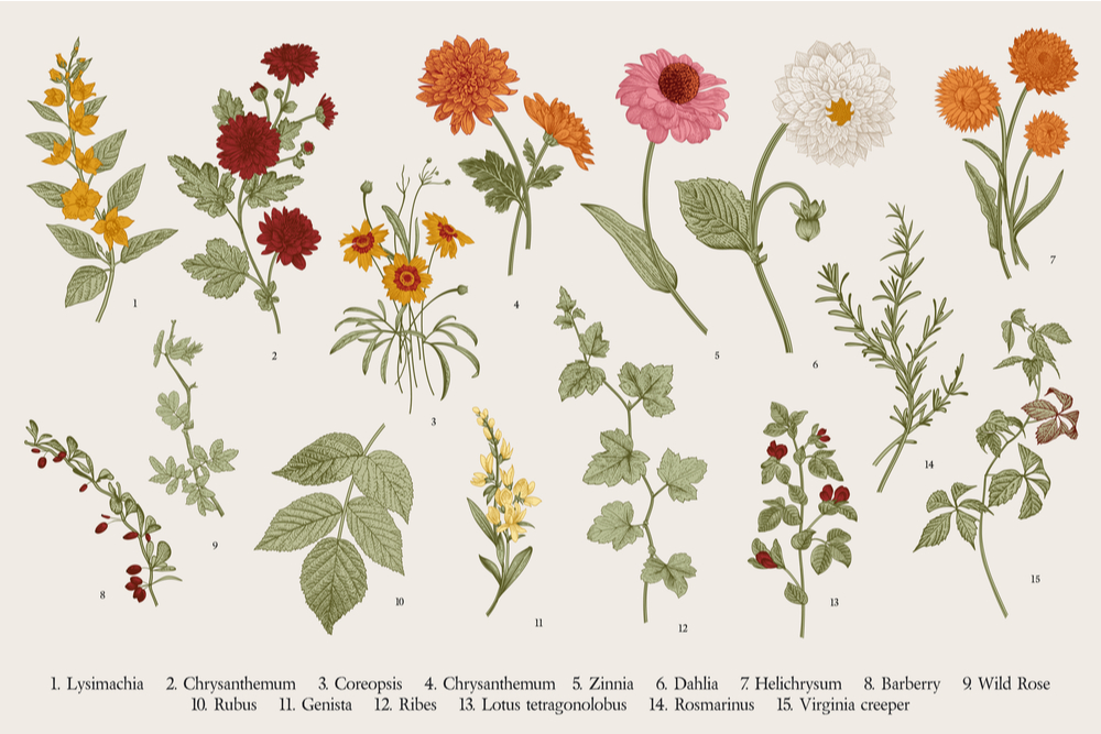 common plants and their descriptions